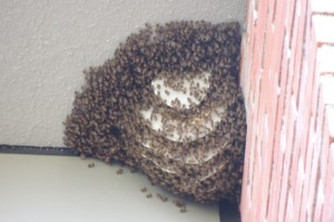 Things were buzzing at work….
