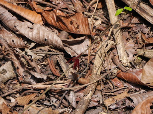 Spot the insect… (hint, dark red in the centre of the image)
