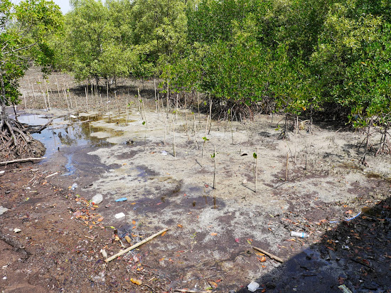General debris and an attempt by replanting the swamp to protected from erosion