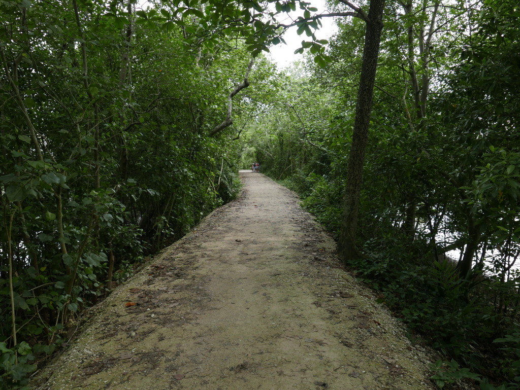 One of the trails at Sungei Buloh Wetland Reserve, Singapore