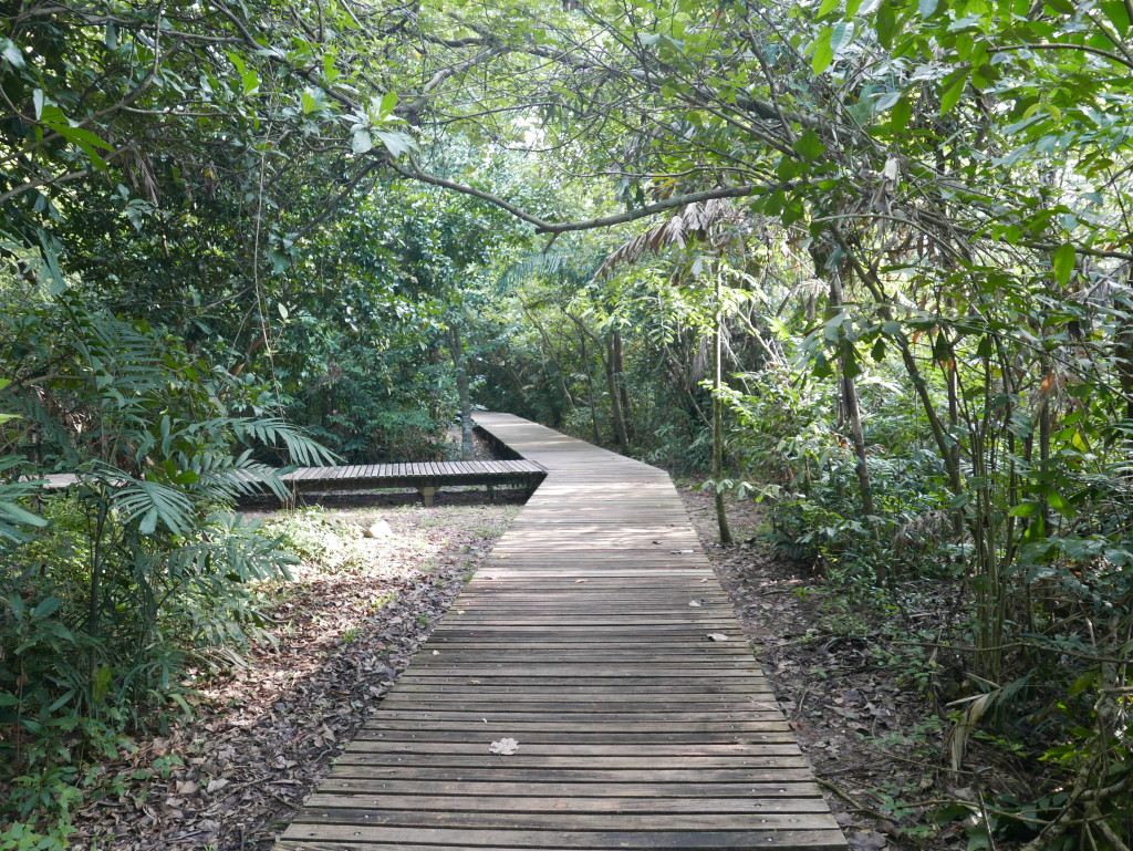 Board walk to the Mangrove Swamp at Sungei Buloh Wetland Reserve, Singapore