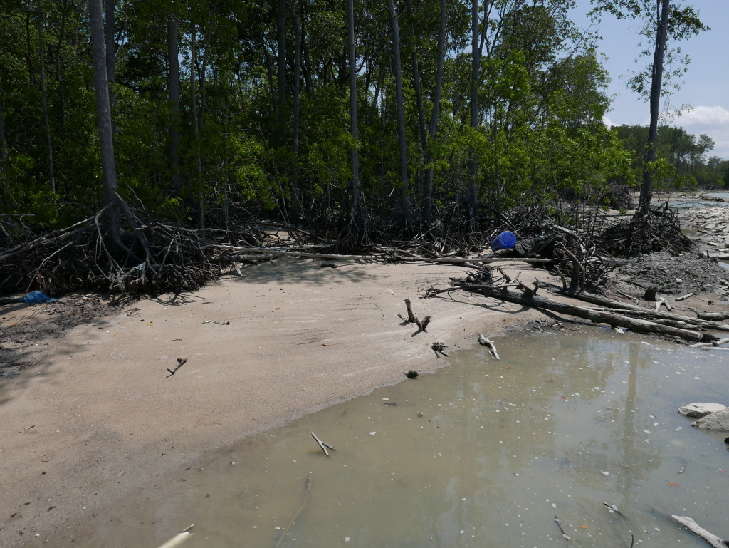 Sandy beach forming at Tanjung Piai National Park