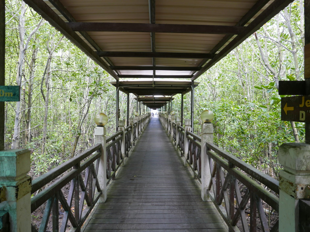 Board walks - Tanjung Piai National Park