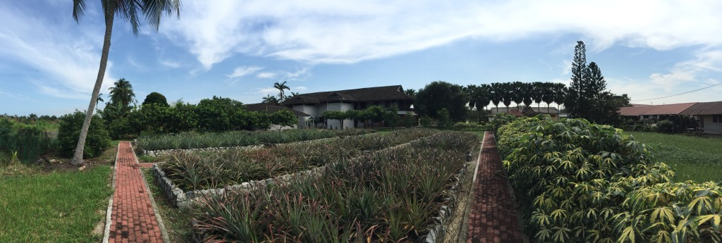 The pineapple gardens at Nanas Moris - Muzium Nanas Johor