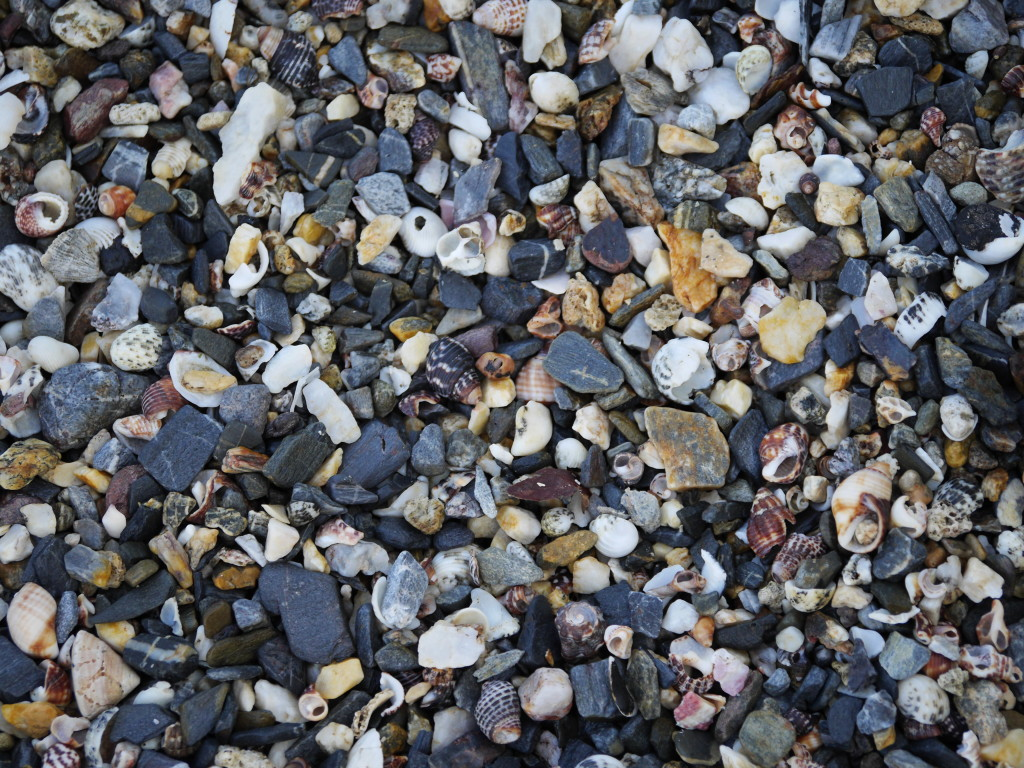 Broken shells and stones