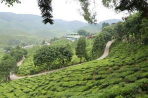 Cameron Valley Tea House, and Cameron Bharat Tea Valley, Malaysia